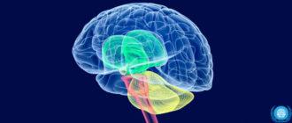Болезни головного мозга