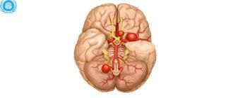 Кровообращения головного мозга