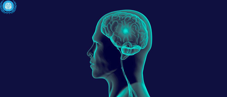 На сколько процентов работает мозг человека