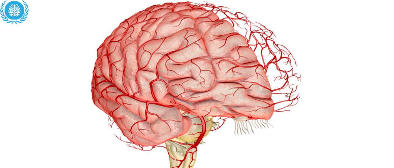 Картинки по запросу улучшение кровообращения мозга